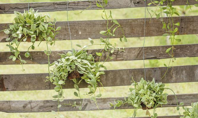 Jard n vertical con un pal bricoman a - Material para jardin ...