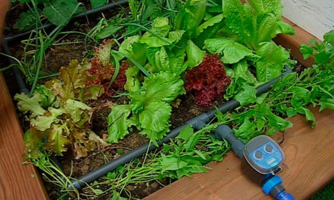 cmo hacer un sistema de riego por goteo bricomana - Bricomania Jardineria