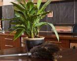 Limpiar las hojas de las plantas de interior