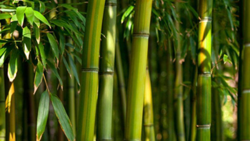 tarimas de bambú
