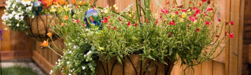 Plantas colgantes - Plantas colgantes de exterior ...