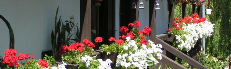 Plantas para terrazas y balcones - Decoracion de balcones con plantas ...