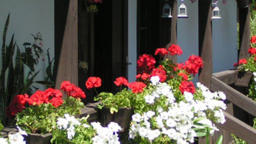 jardin vertical casero c mo hacer un jard n el blog de los mejores consejos y jardineria alicante 4 Terrazas y balcones