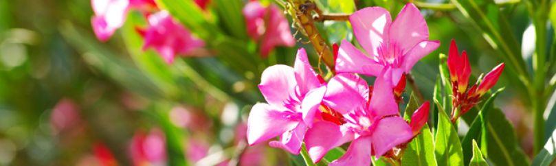 jardines y plantas de exterior