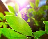 Luz para las plantas