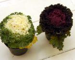 Las coles ornamentales