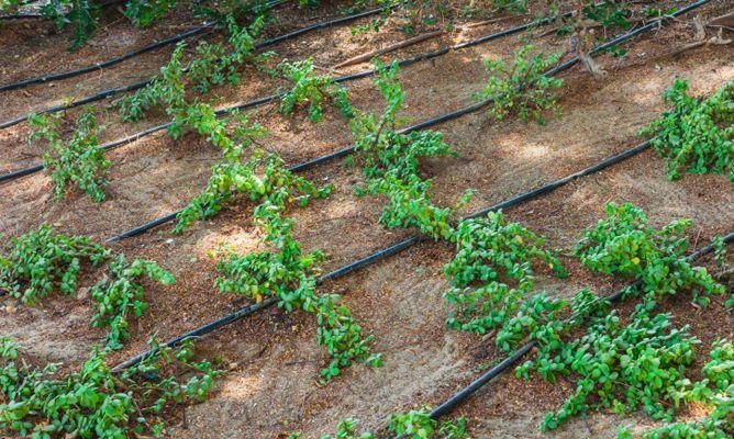 Riego por goteo para la terraza o el jard n hogarmania for Sistema de riego por aspersion para jardin