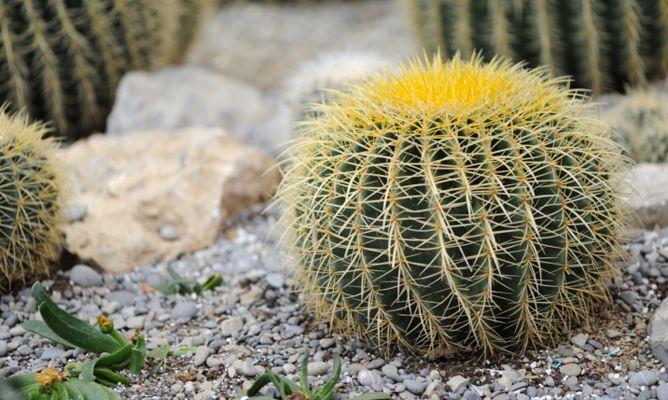 jardines con cactus y piedras