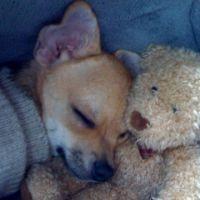 Conguito perro ganador concurso mascotas noviembre