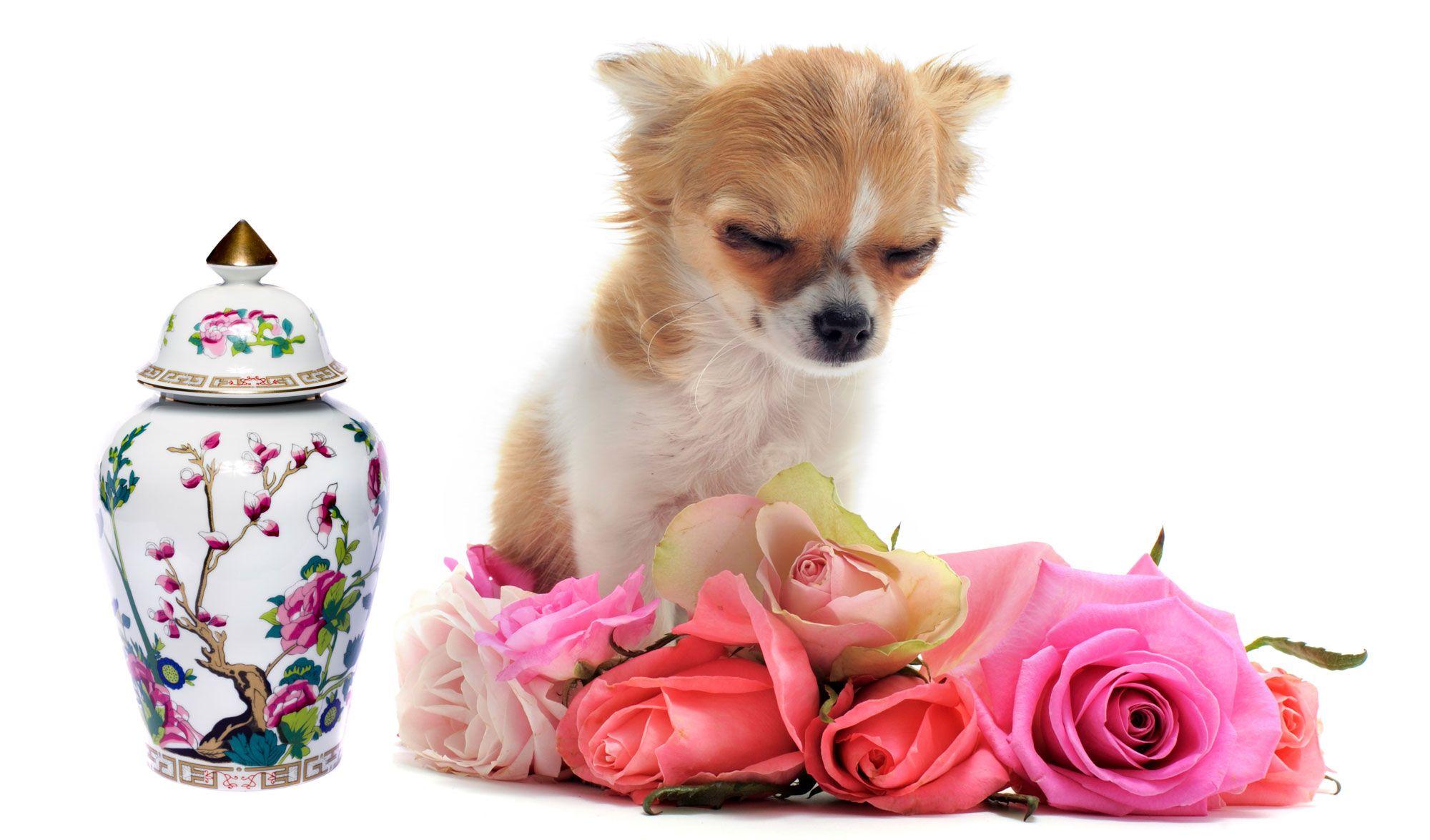 crematorio mascotas