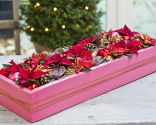 centro navidad flor pascua con caja reciclada