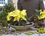 Paso 1 - Centro rústico con flor de pascua amarilla