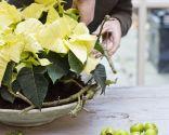 Paso 2 - Centro rústico con flor de pascua amarilla