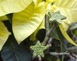 Paso 4 - Centro rústico con flor de pascua amarilla