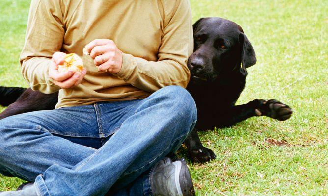 Perros insulina para personas con diabetes hogarmania - Animales con personas apareandose ...
