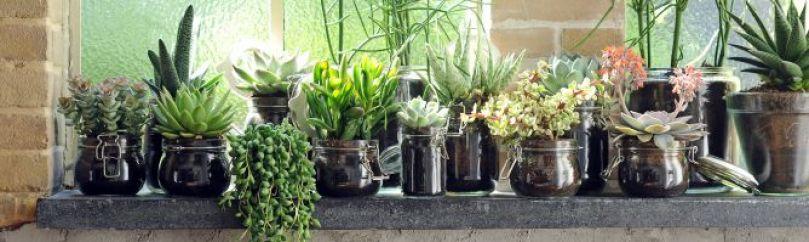 Plantas fuertes y resistentes for Plantas de jardin resistentes