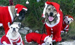 perros ganadores diciembre