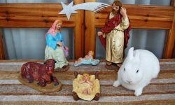 conejo ganador diciembre