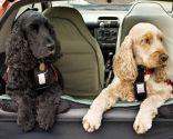 proteger mascota calor - coche