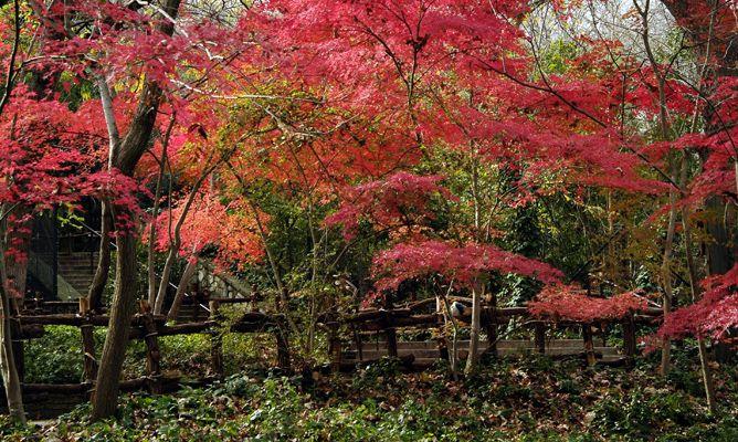 Arces japoneses en oto o decogarden for Jardines en otono