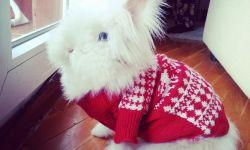 Dora - ganadora concurso mascotas enero 2014