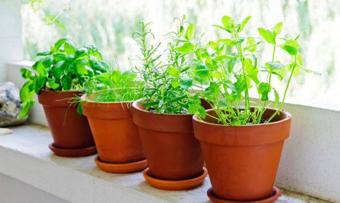 5 plantas aromáticas básicas para la casa - hogarmania