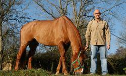 cuidado caballos centro hípico