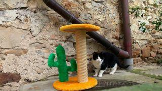 Arreglar un rascador de gato