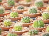 Plantas pequeñas para decorar
