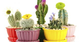 Plantas peque�as para decorar