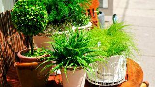Novedades en plantas de interior