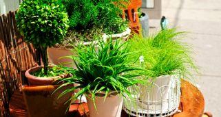 Pedestales para las plantas bricoman a - Jacinto planta interior ...