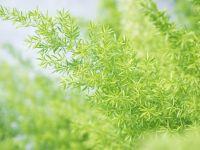 4 plantas fáciles y resistentes