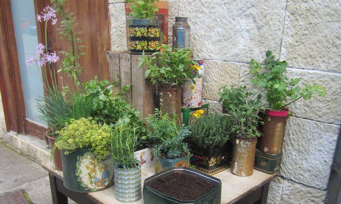 Plantas arom ticas en latas bricoman a - Jardin de aromaticas ...