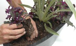 Centro de mesa con orquídeas terrestres