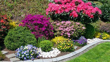 Fichas de plantas de interior y exterior for Arbustos de jardin nombres