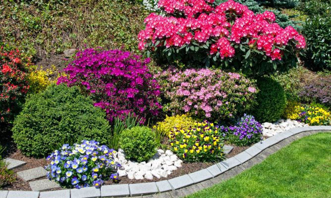 3 arbustos para principios de primavera decogarden for Arbustos para patios