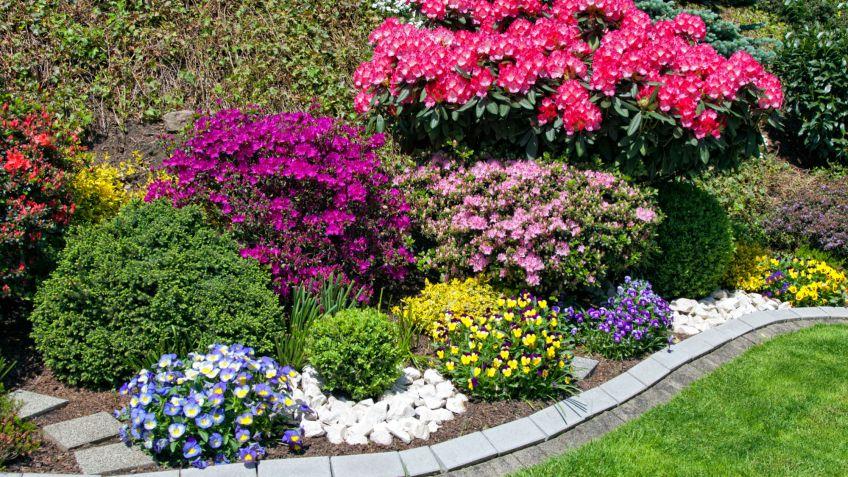 Fichas de plantas en jardiner a fichas for Jardines con arboles y arbustos