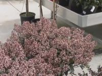 3 arbustos para principios de primavera