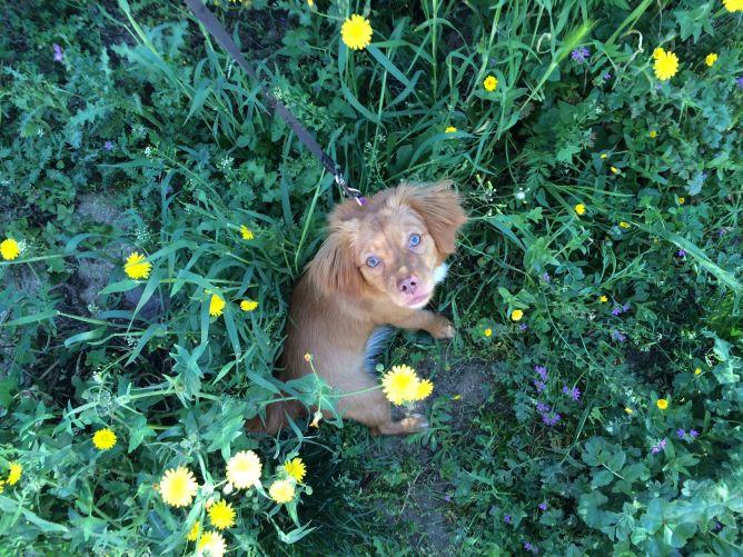 Margot perra ganadora concurso abril 2014