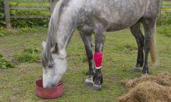 hospital de rehabilitación de caballos