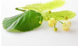 Tilo, planta para mejorar la circulación