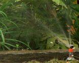 acolchado plantas - evaporación