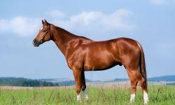 caballos inhabilitados para la monta