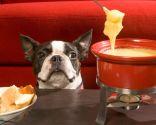 comida humana perros