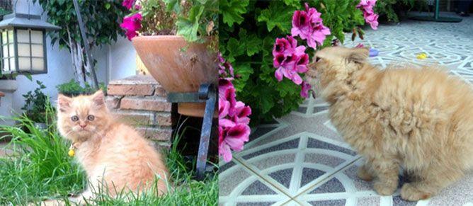 Hapi gato ganador concurso mascotas mes abril