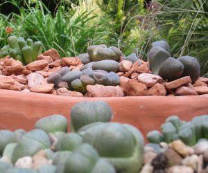 Composición con piedras del desierto