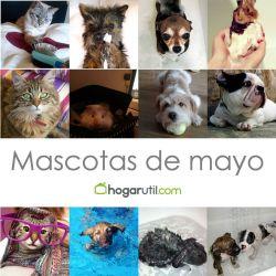 ganadores anteriores mascotas