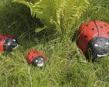 piedras pintadas jardin