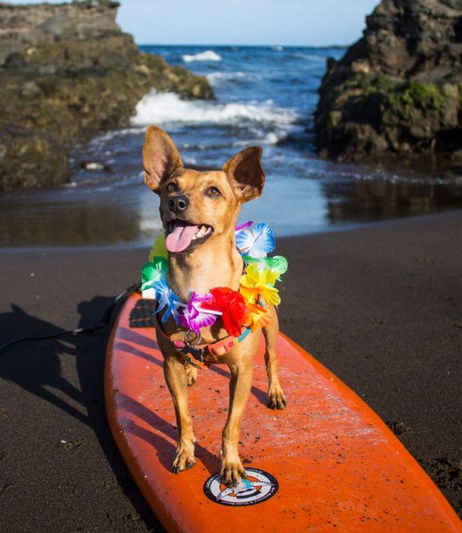 Kike - perro ganador mascotas junio 2014